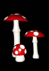 41i1__mushroomset